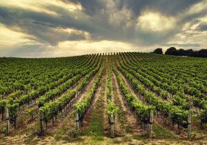In Vino Veritas: Vintage Wine Estates is a Pure-Play Bet