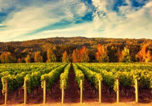 Thursday: IPO Edge to Host Virtual Forum and Tasting with Bespoke, Vintage Wine Estates