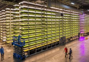 AeroFarms CEO and CFO Discuss New St. Louis Facility, Nokia Bell Labs Deal, SPAC Merger – Replay